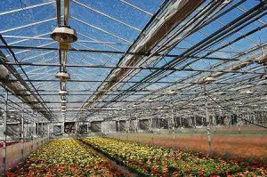 Green Circle Growers - energy efficiency - energy curtain
